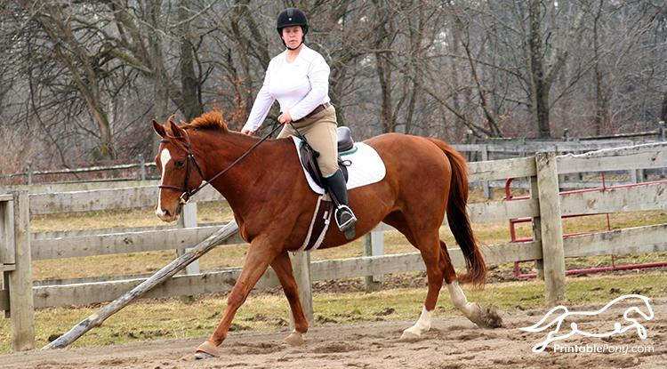 Miles Cantering with Ogilvy Hunter Half Pad and Baby Pad