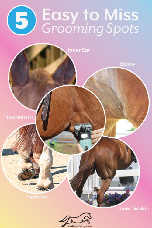 photo about Grooming Tools for Horses Printable Worksheet named 5 Simple in direction of Skip Grooming Places - The Printable Pony