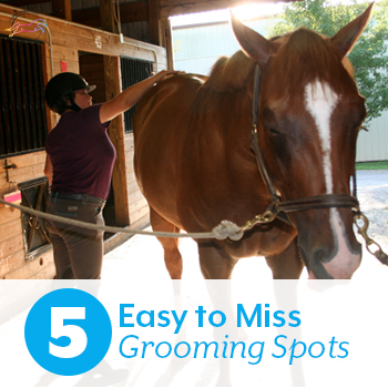 5 Easy to Miss Grooming Spots