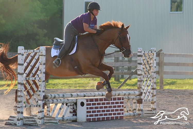 Vantage Equestrian Lifestyle tee in Action