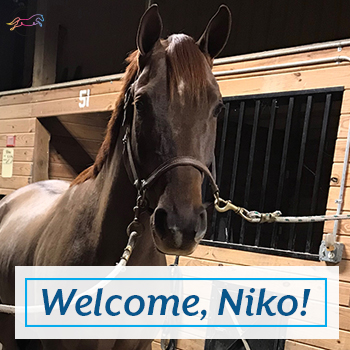 Welcome Niko