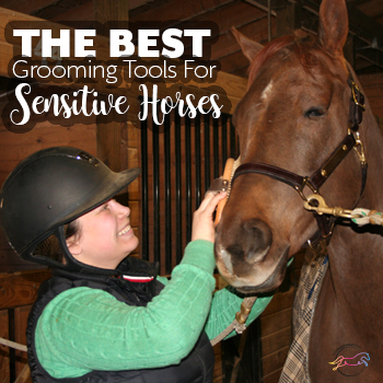 Best Grooming Tools For Sensitive Horses
