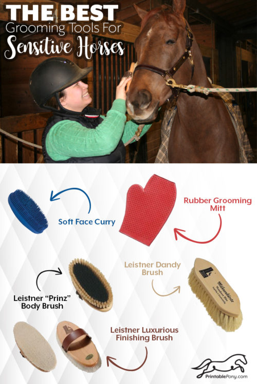 photo regarding Grooming Tools for Horses Printable Worksheet identified as Great Grooming Applications for Fragile Horses - The Printable Pony