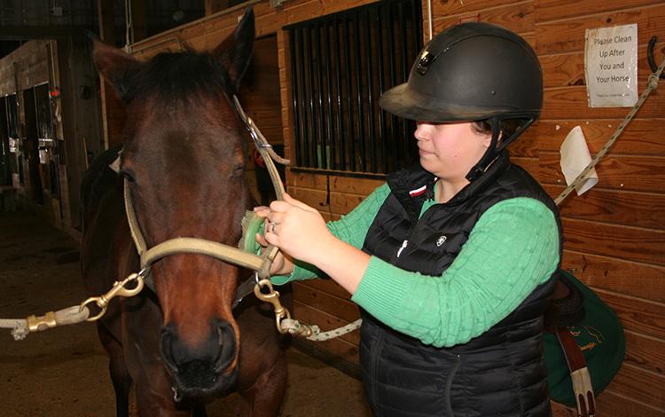 photograph about Grooming Tools for Horses Printable Worksheet identified as Easiest Grooming Applications for Delicate Horses - The Printable Pony